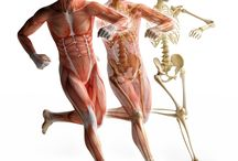 Fascia and the human body