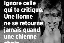 Proverbe, Humour et Citation