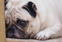 Por que lloran los perros