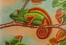 Animal kingdom chameleon