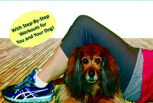 Dog Books you need in your Library / Essential Dog Books that help you and your dog enjoy your life together
