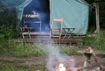 GLAMP / by Amelia Champion