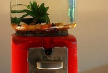 Aquaria's en vissen