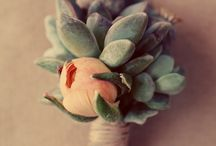 Weddings: succulents