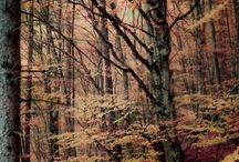 Forrest/Nature