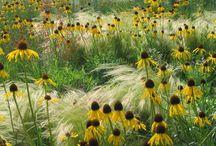 Beplanting - grassen