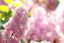 Flowers / by shrinee singh