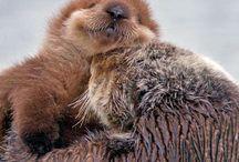 Cute otter