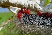 CENTIPEDE &  Caterpillar