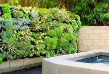 Succulent Vertical Garden Ideas / Succulent living living walls are great for high-light and low water conditions.