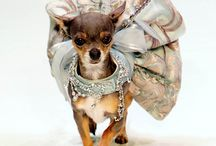 Doggy Runway - Total Pettitude / Who said Pet Fashion has to be boring?   Hamish McBeth stylish, quality clothes for your pet