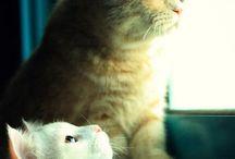 Gulliga katter / Katter