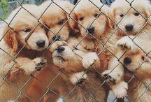 Puppy land