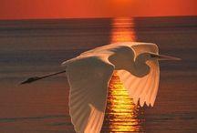 Kuşlar & Birds