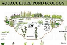 Permaculture / Links and things related to permaculture.