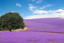 Výlety Francúzsko - Provence