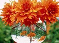 Flowers, Plants, & Gardens / by Bizalamode