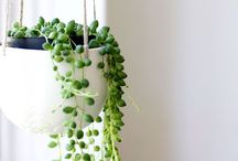 home garden plants idea