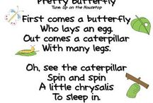 home ed: butterfly