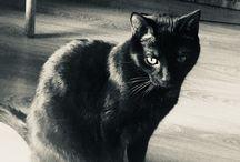 My Felix / Black cat
