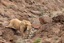 Eye See Africa - Lodges / Best Lodges in Africa