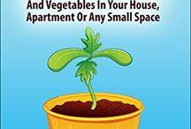 Growing veggies in my house:)