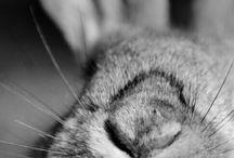 close up bunny