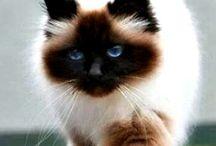 Котеньки