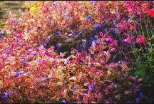 買い物の帰り道に道端で見かけた、大阪のオバちゃんみたいに派手な草。 colorful grasses #grasses #snapshot #道草 #帰り道写真