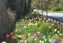 Spring Color Burst