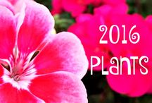 2016 Plants / Get excited about these Annuals, Perennials and Trees that will be arriving this spring!
