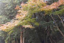 東亜和裁インスタ祭り2015 / 美しい紅葉を各支部のインスタアカウントより...