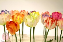 fiori gumpste