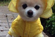 Puppy clothing =)