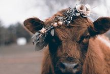 Swoon | country living / the country life