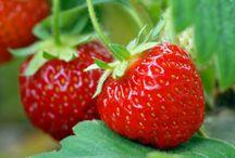 Erdbeeren / by Angeline