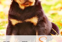 Doggie love / All about dogs