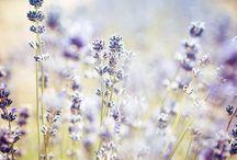 flowers_nature