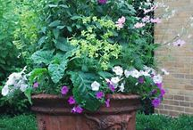 Pots and Containers / Thrilling combinations of plants in pots and containers.