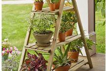 Ideas para tus plantas