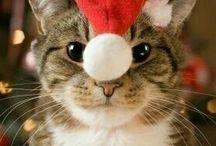Gattini buon Natale