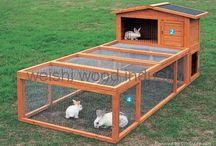 Rabbit hutches