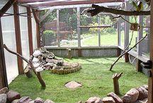 Birds Aviary