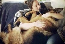 kutyák és más háziállatok