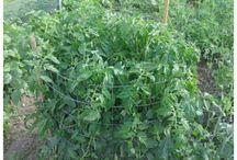 My Nanny's Veggie's