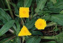 // Yellow //