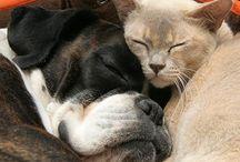 Zwierzęta w domu/animals at home
