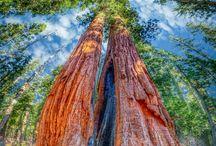 Tour of Trees USA