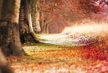 Lovely Landscapes & scenery