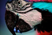 Birds / by Nienke Lassche